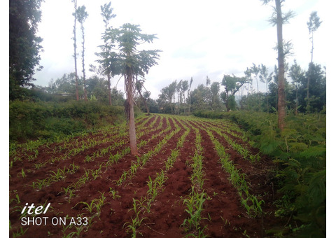 Land and Plots