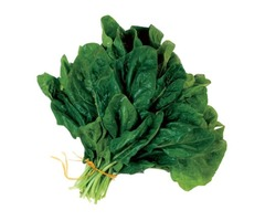 Fresh Vegetable Supply – Spinach