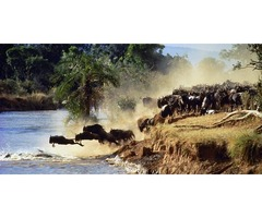 Jamhuri Holiday Safari To Masai Mara Camping Adventure 2 Nights 3 Days 11th - 13th Dec 2015