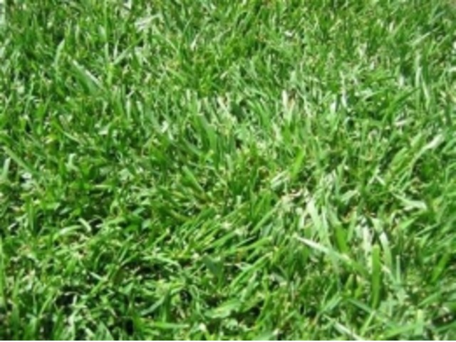 Zimbabwe Grass Nairobi Deals In Kenya Free Classifieds