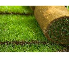 kikuyu grass carpet At Asepsis limited stores