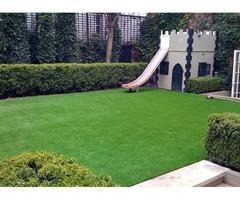 plants +lawn grass