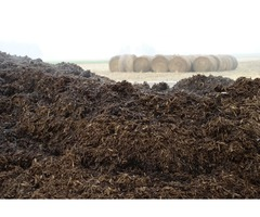 manure for sale