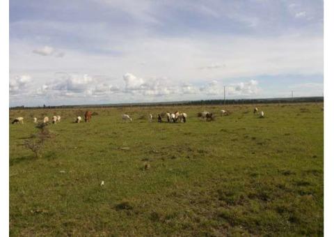 Prime 10 Acres Land at Sholinke (Rongai)