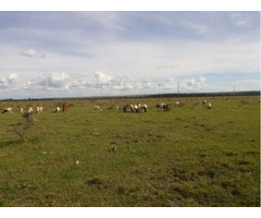 Prime 10 Acres Land at Sholinke (Rongai)