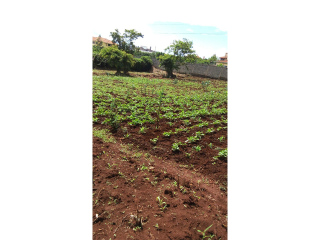 Quarter acre plot for sell in RUAKA.L4.