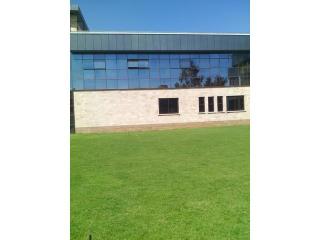 tiff sport lawn grass