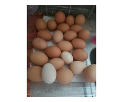 Best Quality Organic Fresh Chicken Table Eggs & Fertilized Hatching Eggs whatsapp +27734531381