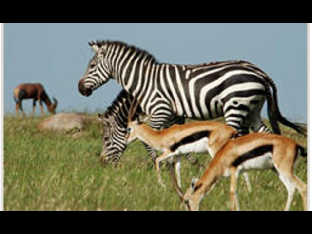 Welcome to you  simba junior tours & travel worldwide  safari