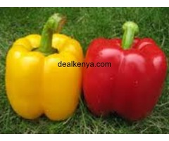Capsicums - Pilipili-Hoho (Red and Yellow)-
